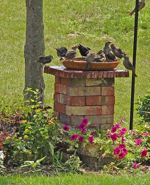 birds-drinking