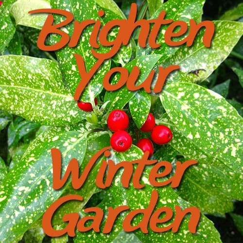 Diy Garden Creative Gardening Blog To Bring Your Garden