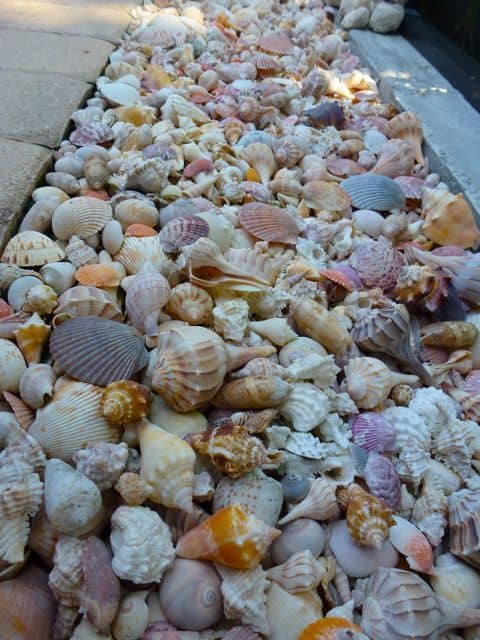 sea shell edging ideas