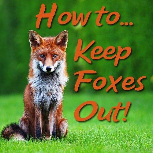 10 Fox Deterrents to Stop Them Coming in Your Garden