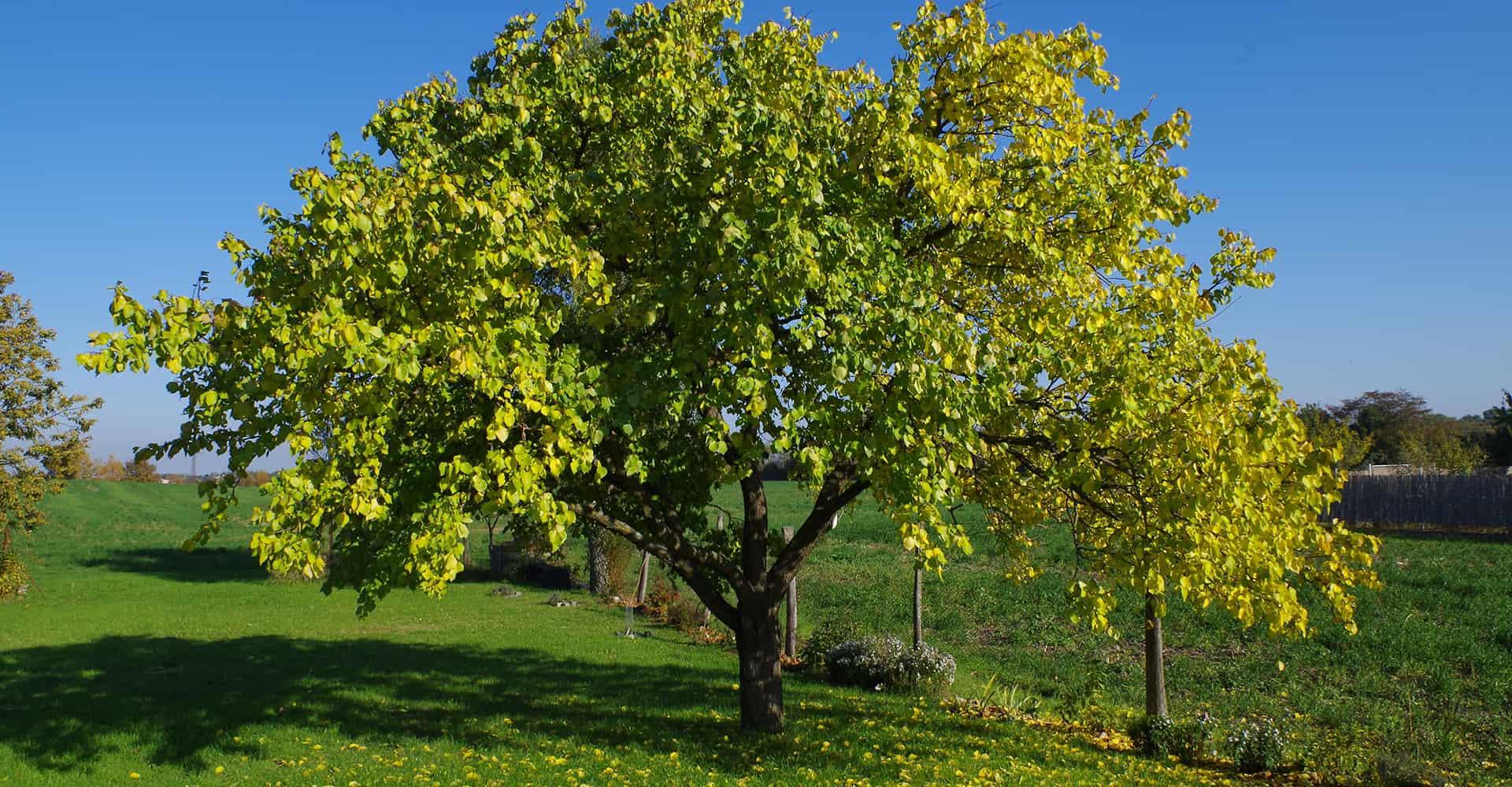 small-tree