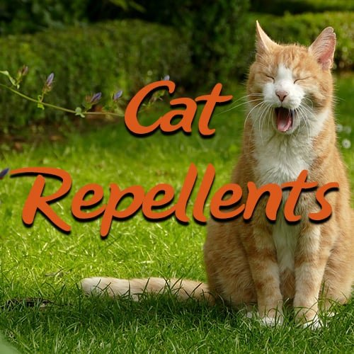 natural balance dry cat food