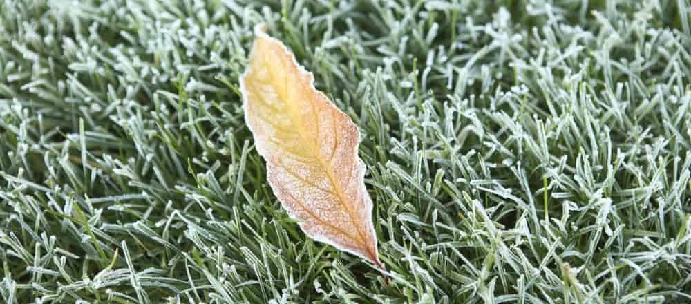 frost-on-lawn-in-winter-