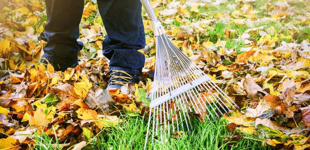 gardener-raking-leaves-in-autumn-e1489758001321