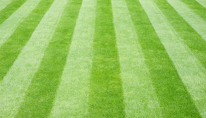 monthly-lawn-care-guide-header-2