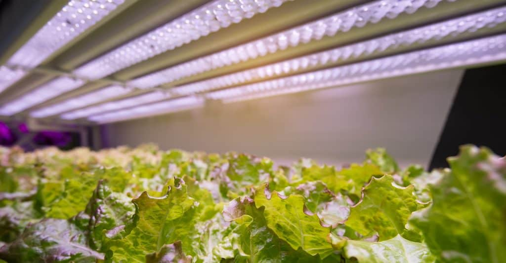 Hydroponics-Lighting