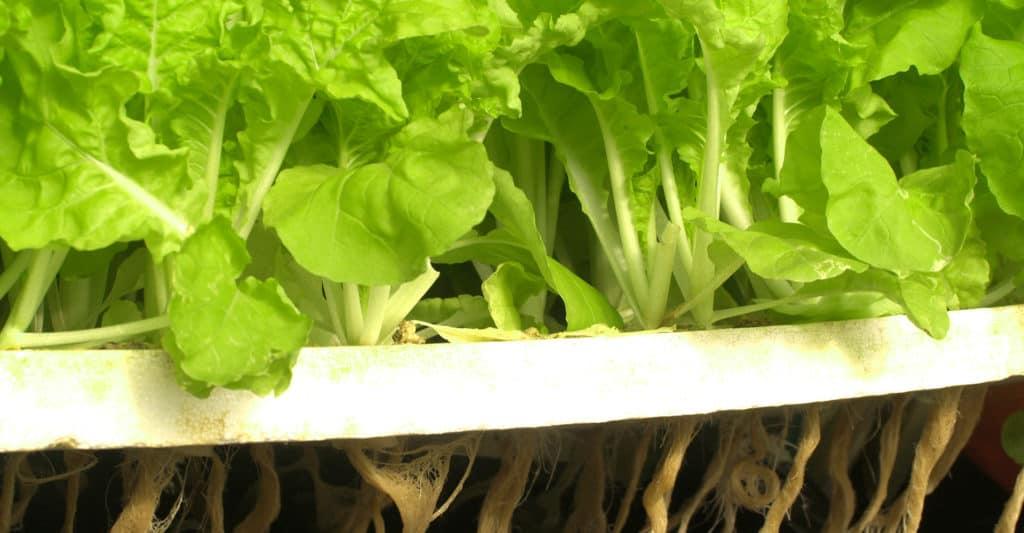ph-hydroponics
