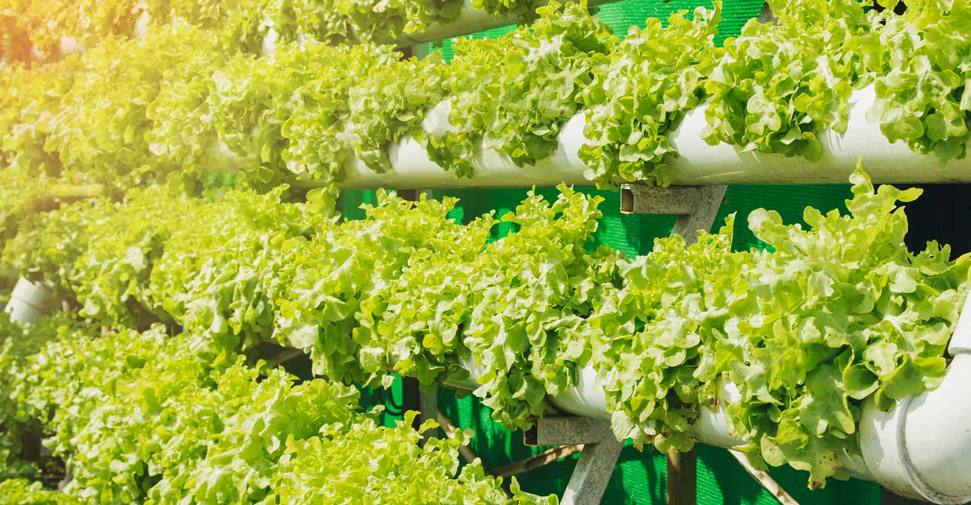 5 Vertical Hydroponic Ideas You Should Try At Home