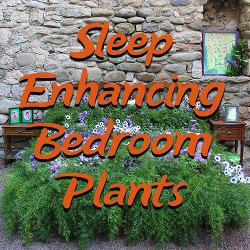 5 sleep enhancing bedroom plants you can t live without. Black Bedroom Furniture Sets. Home Design Ideas