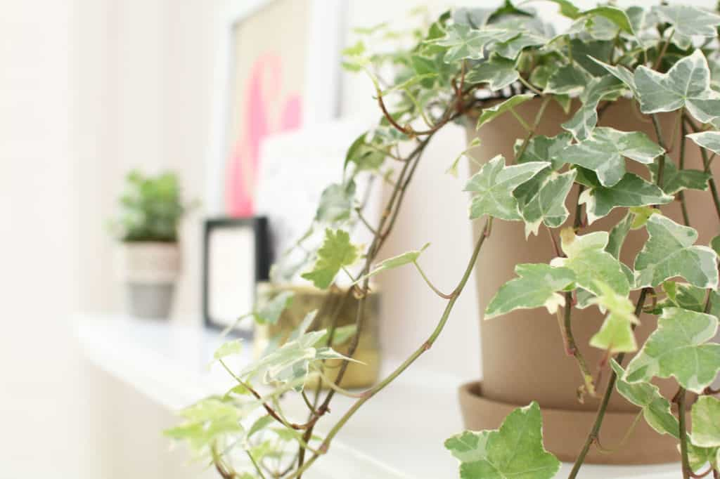 english ivy bedroom