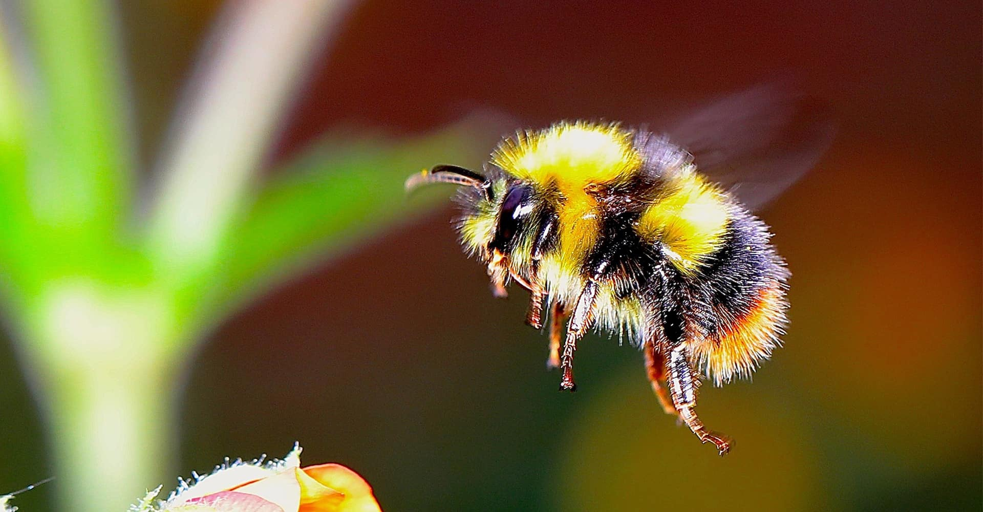 The Ultimate Guide To British Bees Amp How To Protect Them