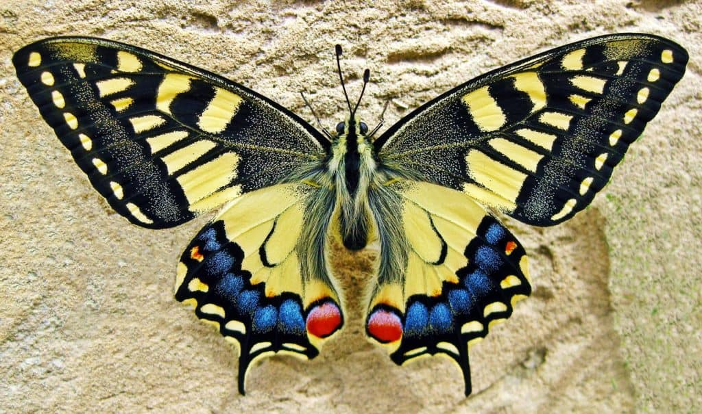 anatomy of butterfly