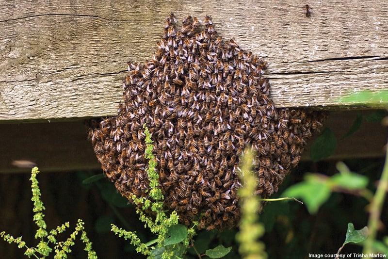 trisha-marlow-swarm