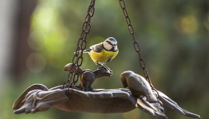 How to Attract Interesting Birds to Your Garden | DIY Garden
