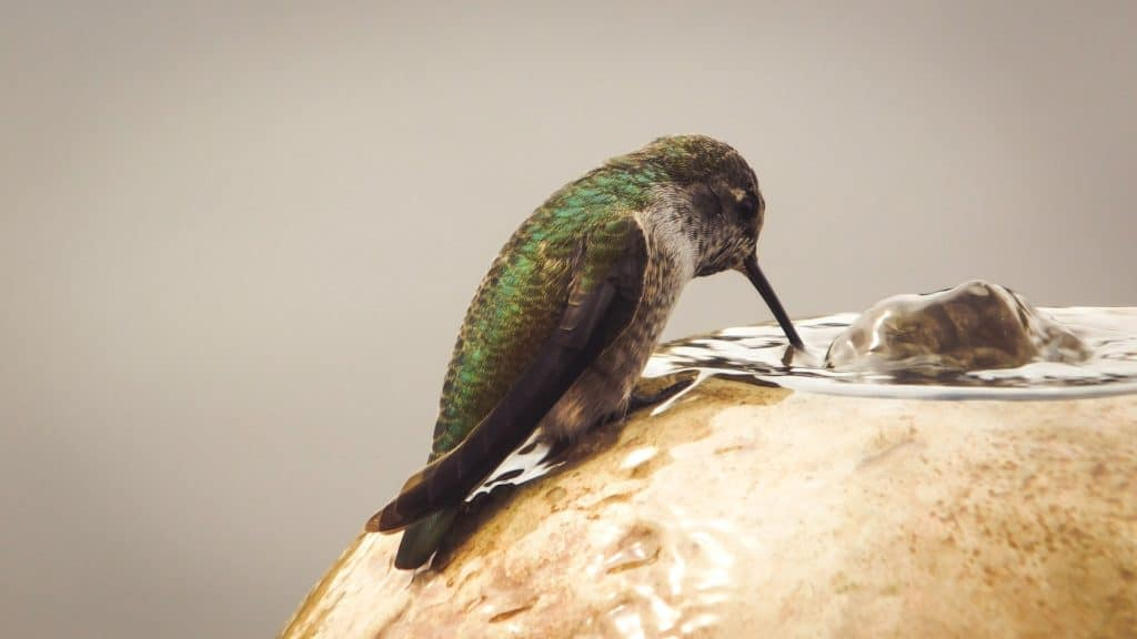 hummingbird birdtable