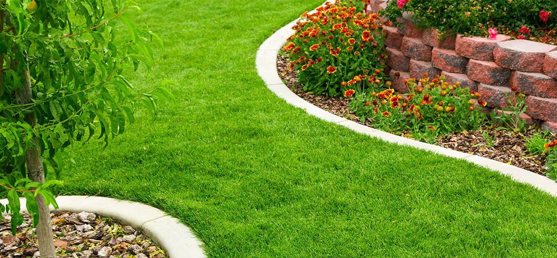 best-lawn-feed