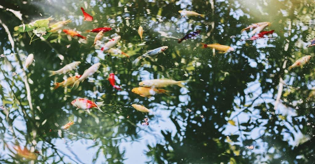 pond-pump