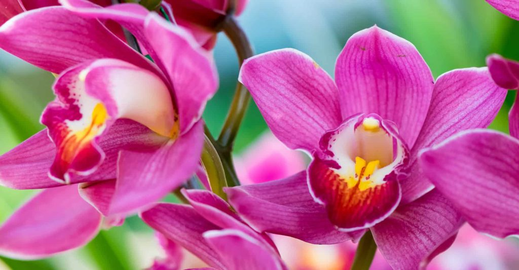 orchid-food