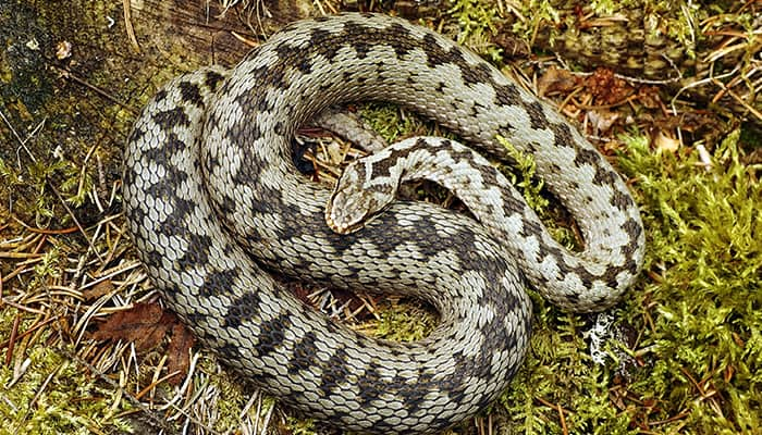 The Ultimate Guide To Grass Snakes Diy Garden
