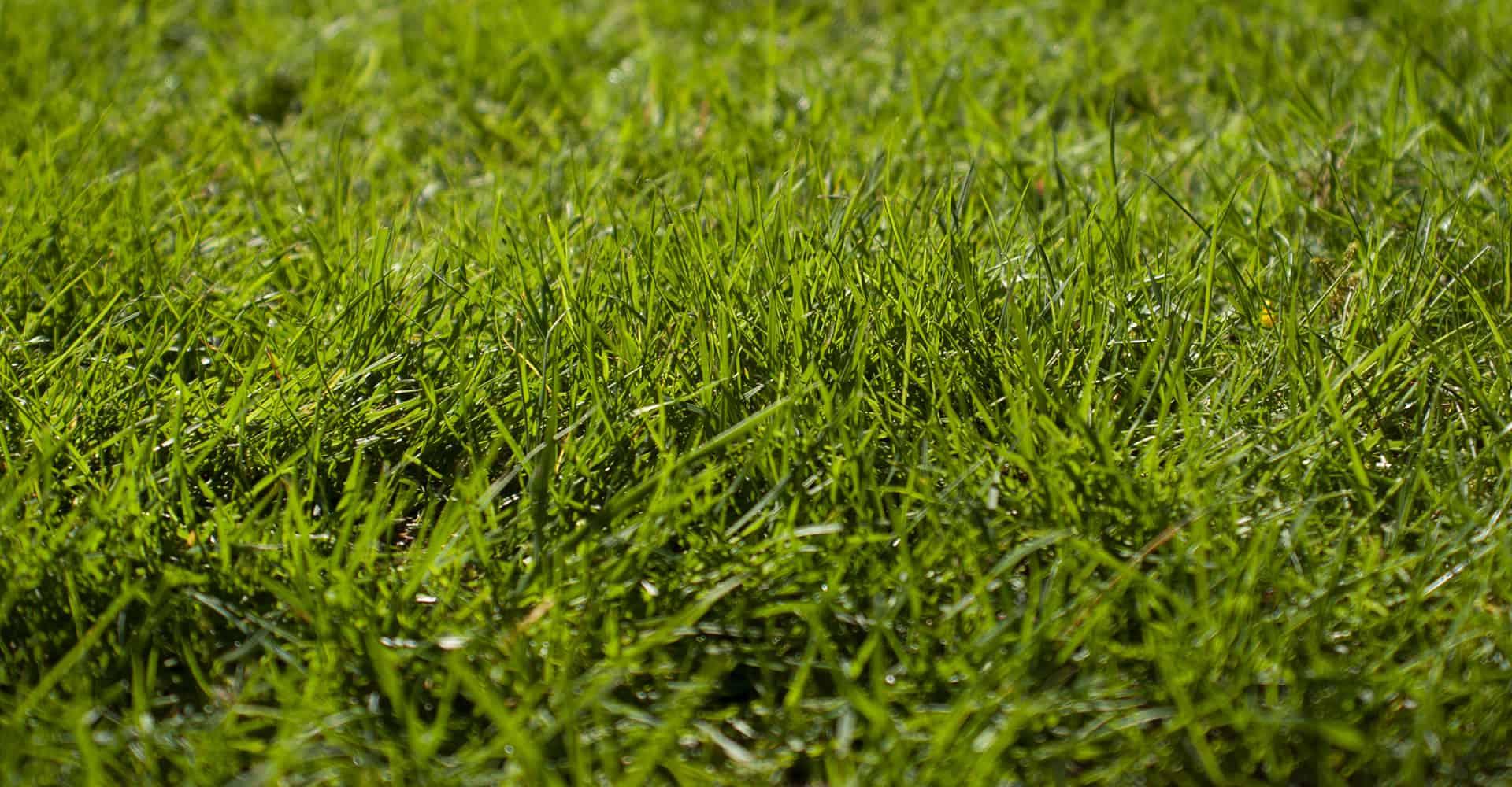 best grass seed