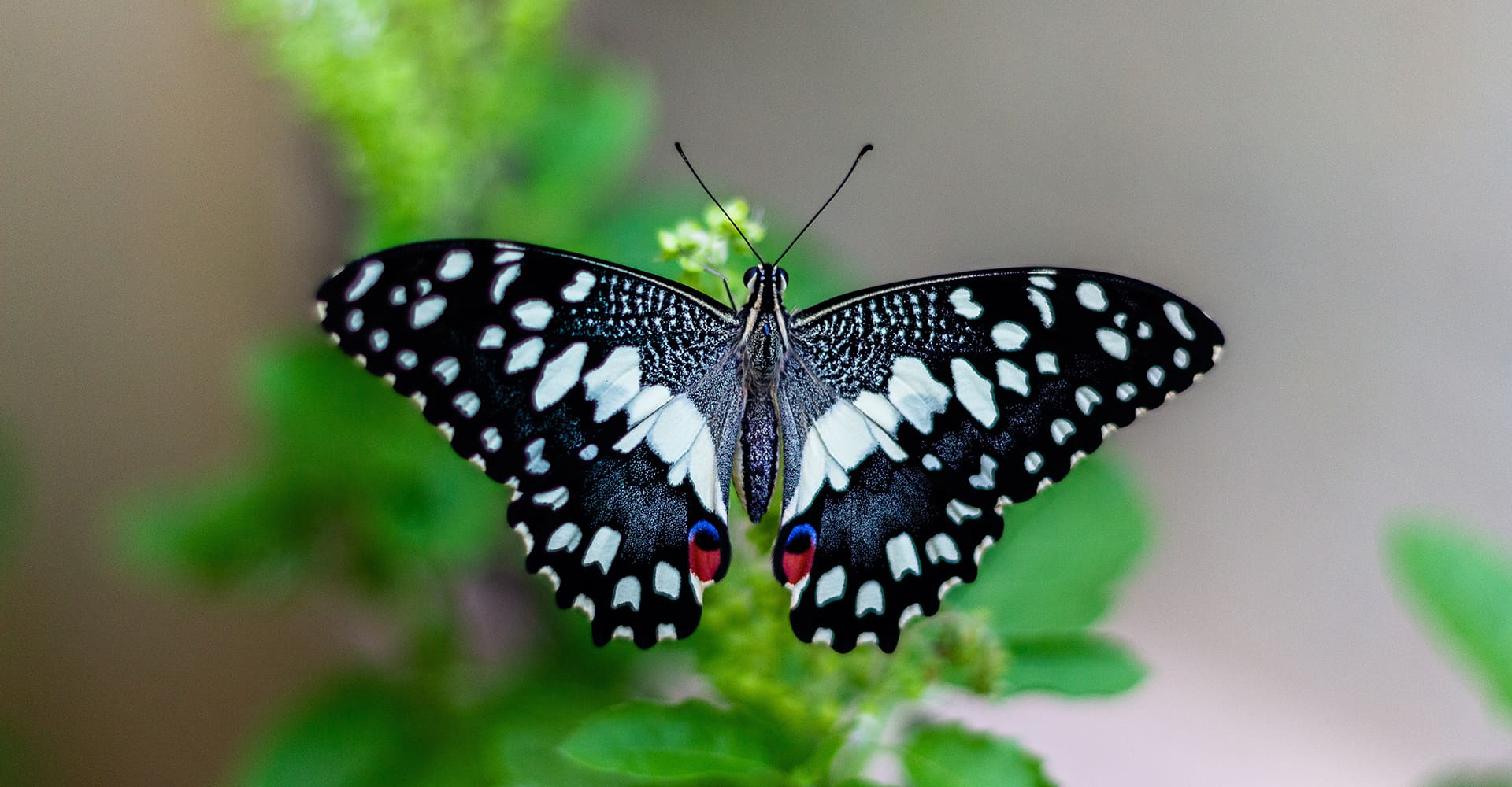 best insect garden