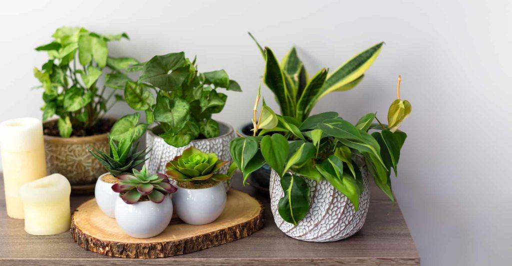 artificial-plant