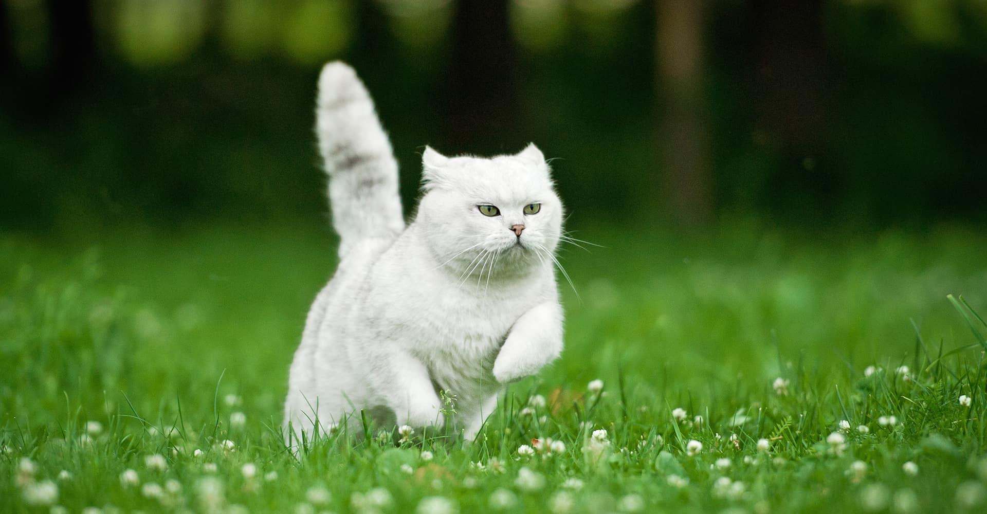 cat-scarer