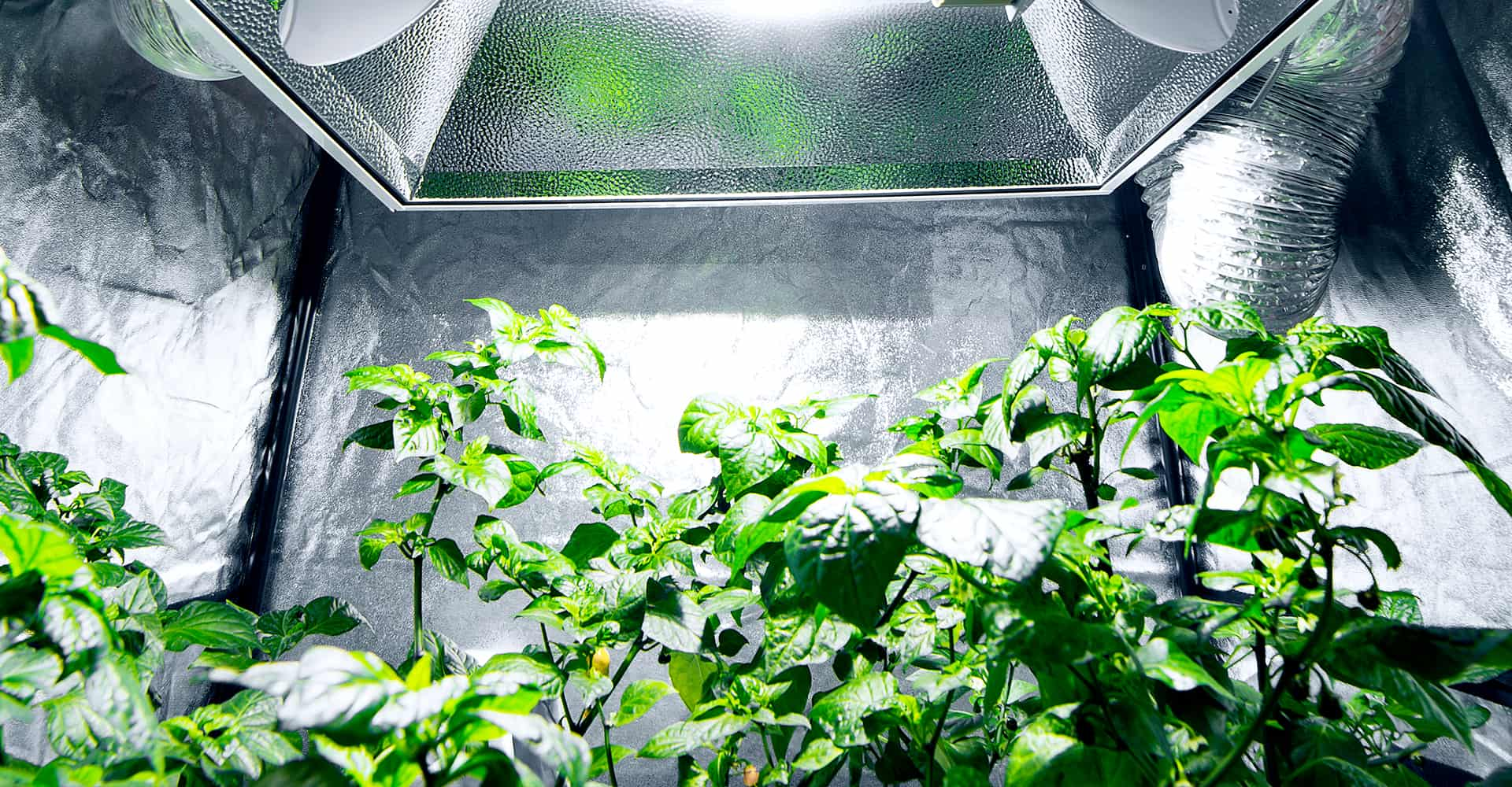 grow-tents