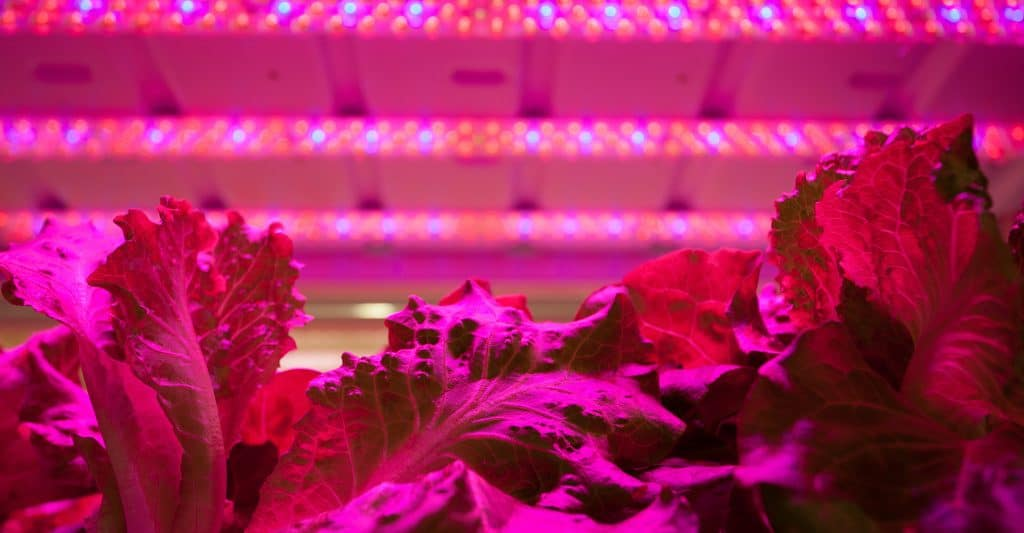 led-grow-lights