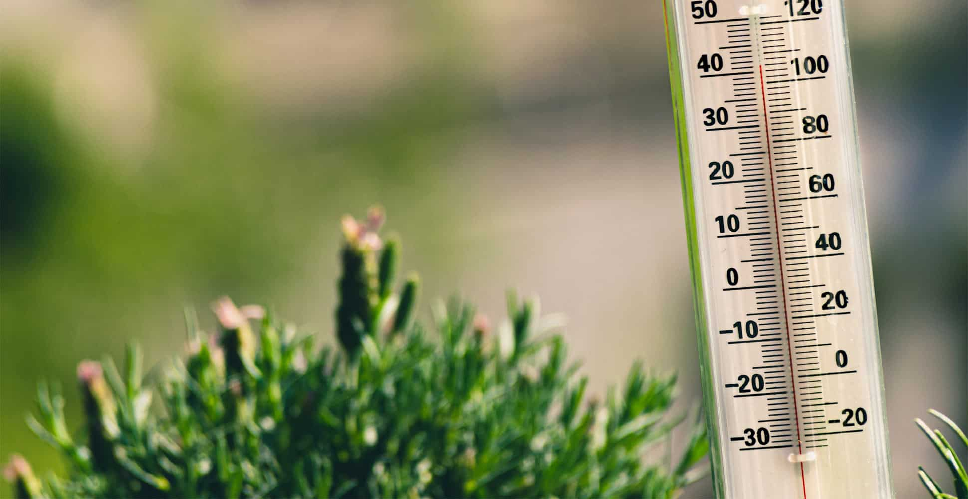 best-garden-thermometers