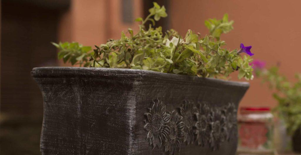 best-trough-planters