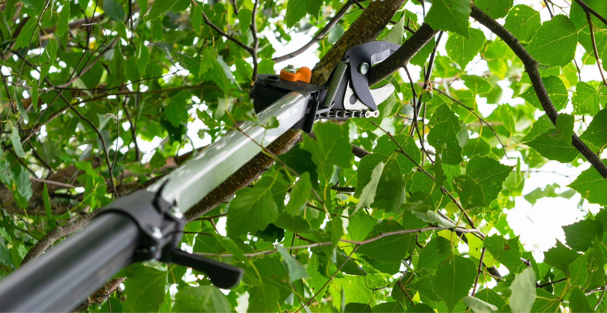 best-telescopic-tree-pruner