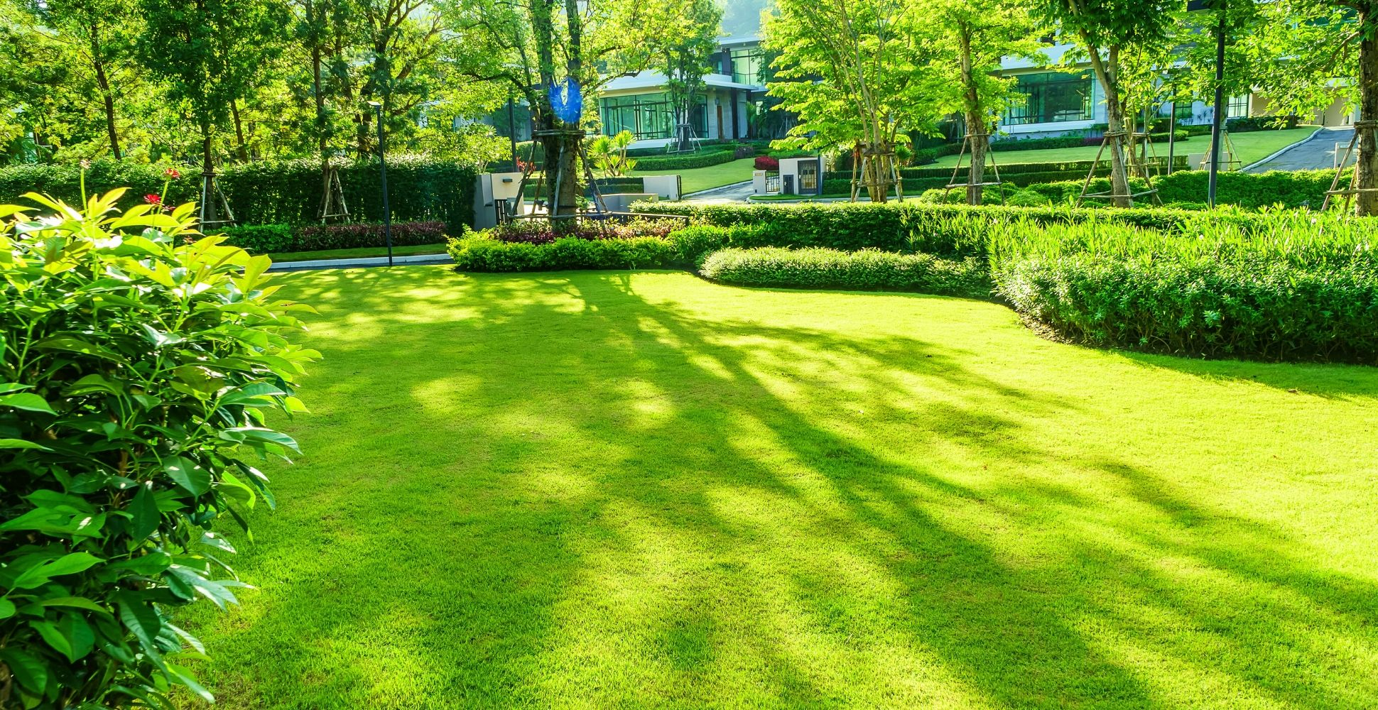 best-grass-seed-for-shade