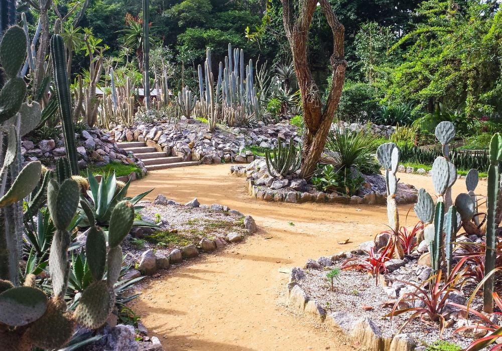 cactus-garden-jardim-botanico-rio-de-janeiro-brazil