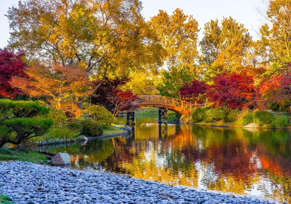 japanese-bridge-missouri-botanical-garden-autumn