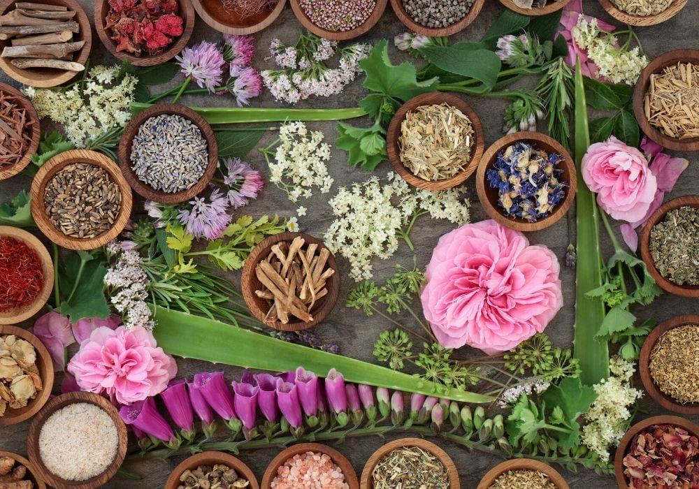 medicinal-plants-history-of-botany