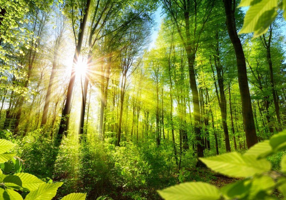 plant-ecology