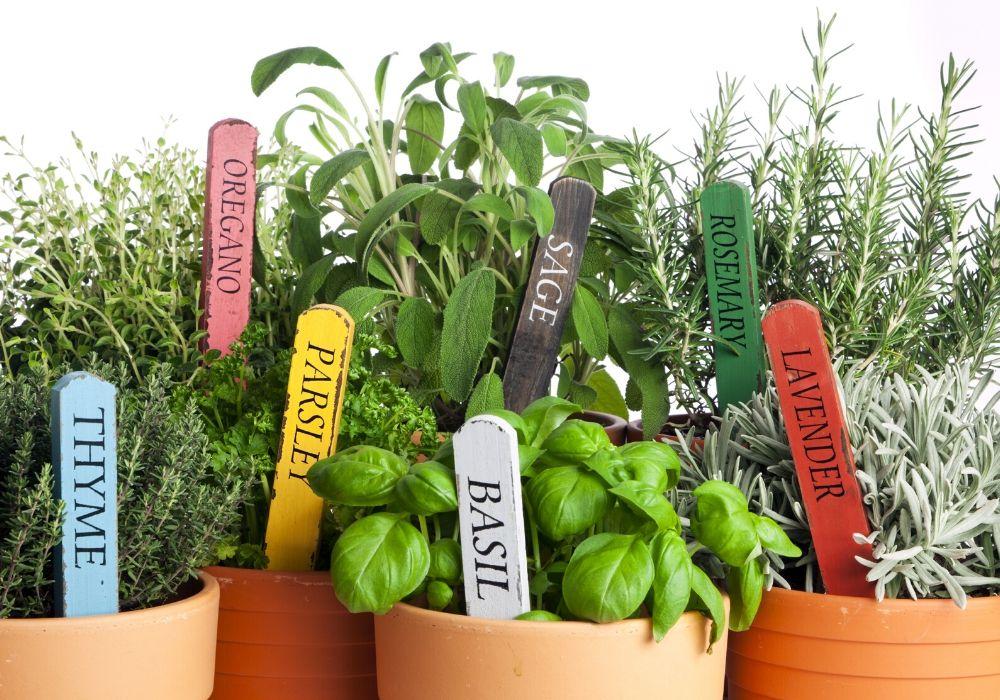 potted-herb-garden