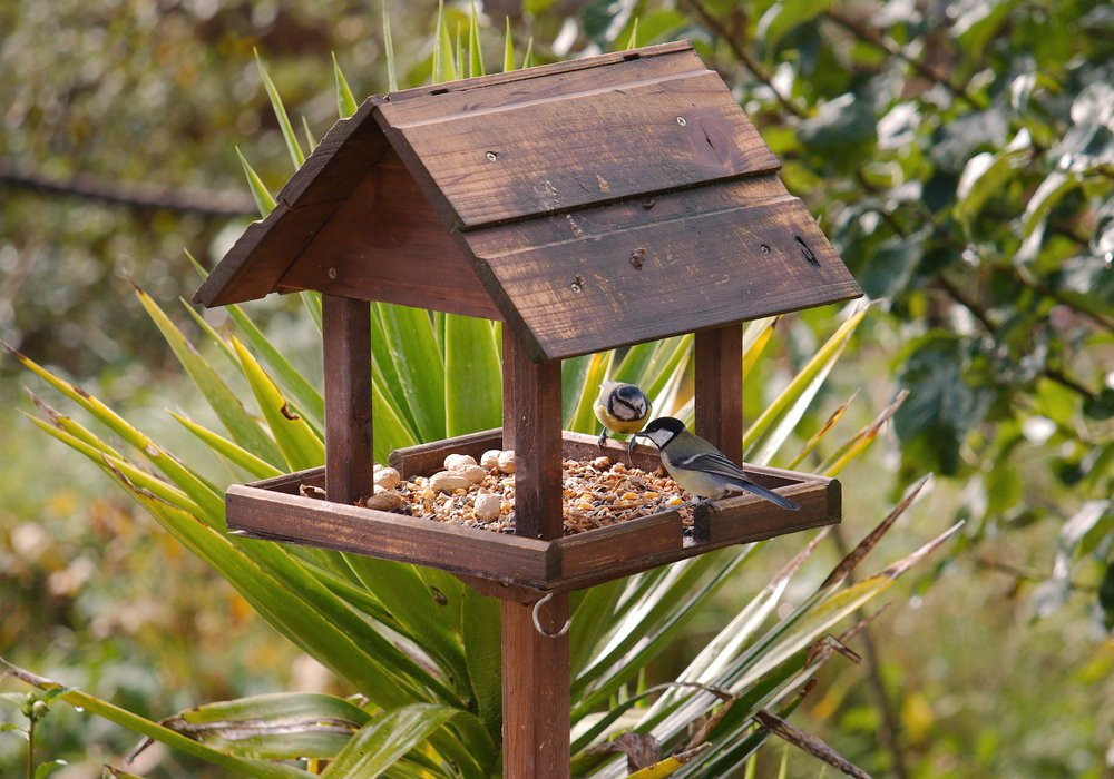 bird-feeding-table