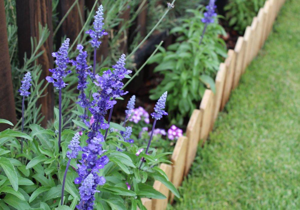 garden-border-header