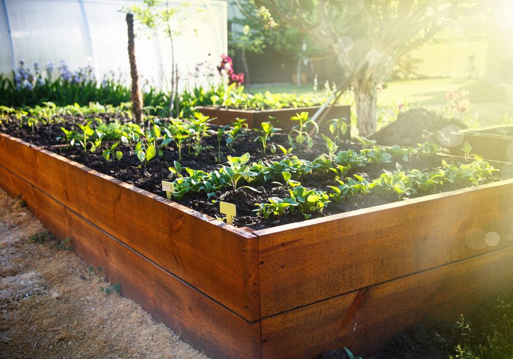 raise-garden-header