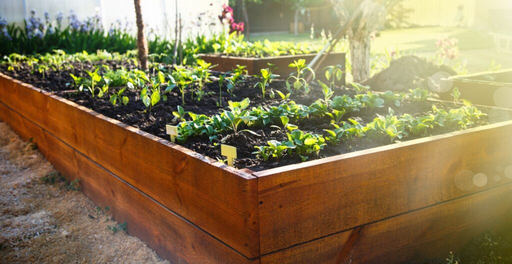 raised-bed-garden