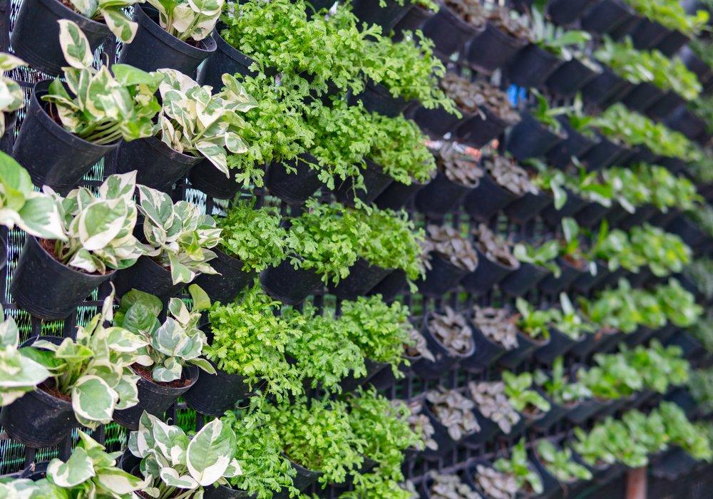 vertical-planting