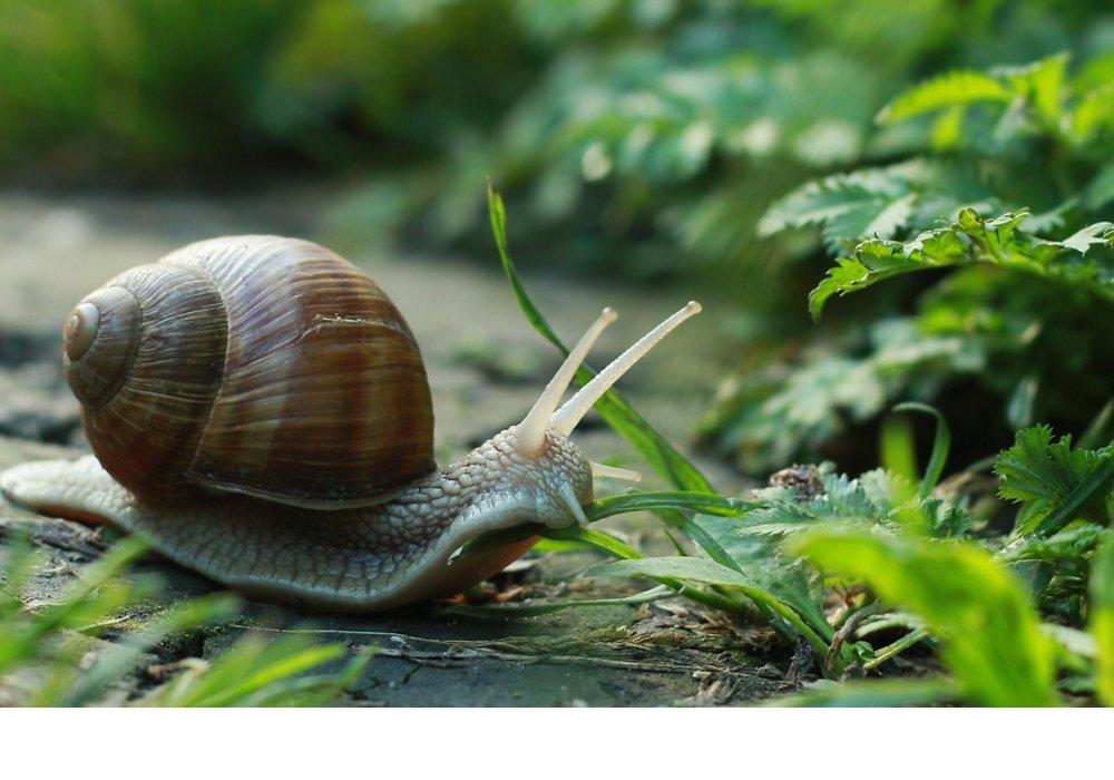 wildlife-garden-header
