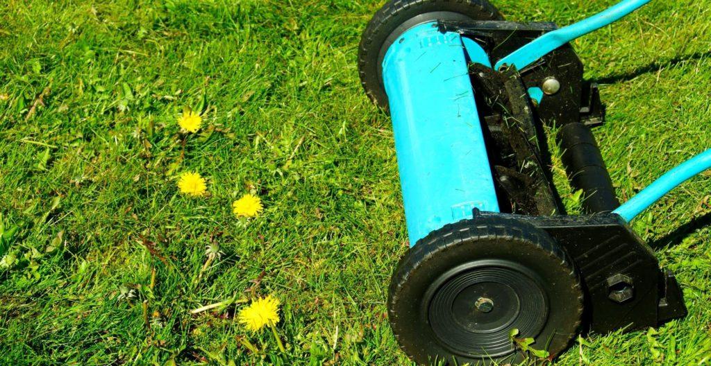 best-cylinder-lawn-mower