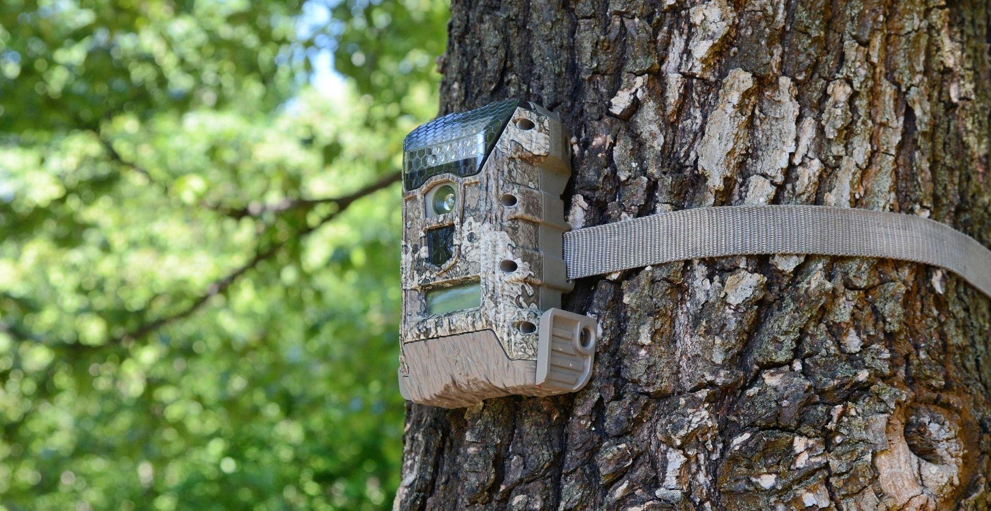best-garden-wildlife-camera