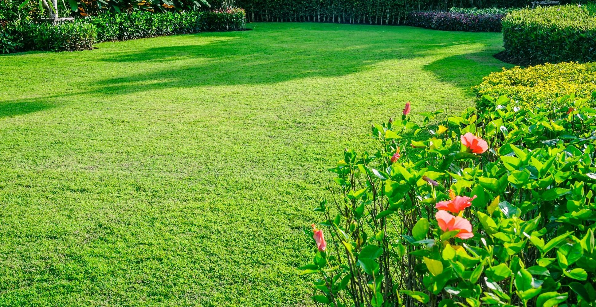 best-lawn-feed-for-spring
