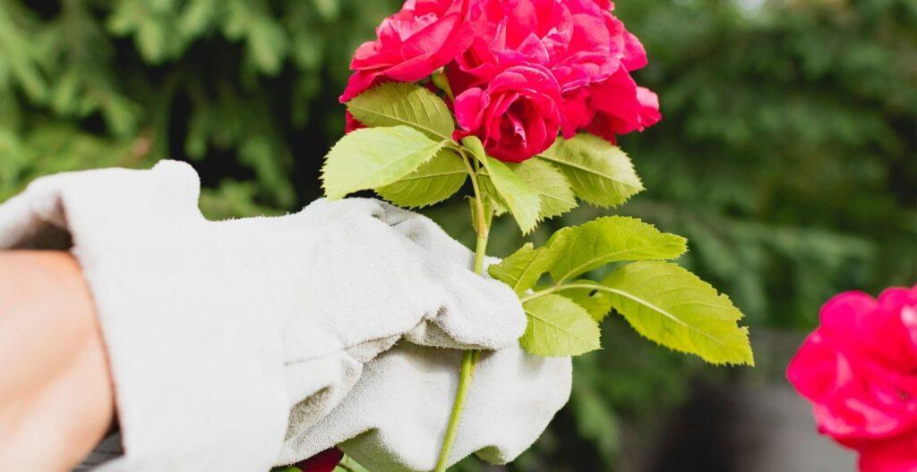 best-thorn-proof-gardening-gloves