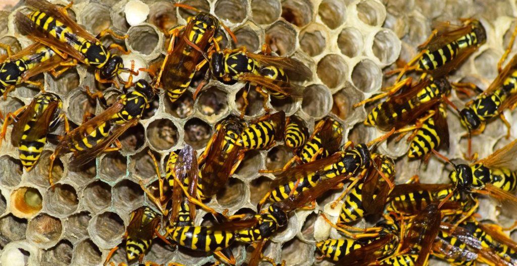 best-wasp-nest-killer
