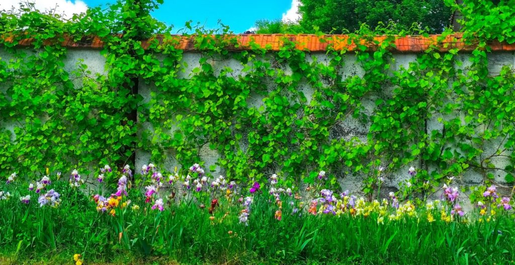 garden-wall-ideas